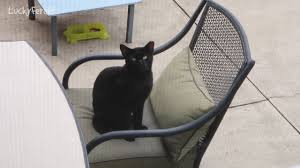 boo day 16 cat patio furniture training and socializing a