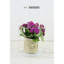 Cylinder Clear Glass Vases Handmade Hurricane Cylinder Clear Glass Vase Pot For Flowers