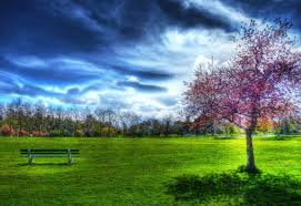 sky bench cars beautiful trees view pretty peaceful spring