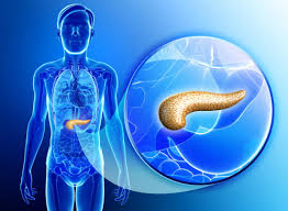 Anatomy Pancreas Human Body Pancreas Functions And Possible Problems