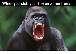 Tree Trunks Meme - when you stub your toe on a tree trunk meme on sizzle