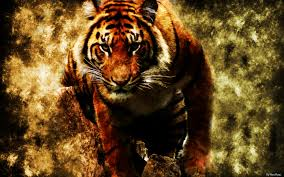 tiger hd wallpapers cool