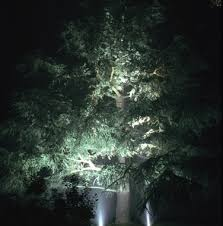 how to light trees