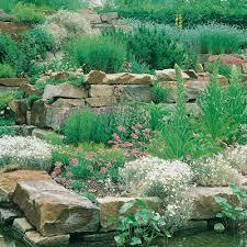 giardini rocciosi in ombra fiori perenni per giardini rocciosi mix pianta perenne giardino