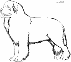 fantastic newfoundland dog coloring pages puppy coloring