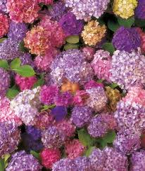Hydrangea Hill Cottage French Country Decorating Hydrangea Hill Cottage Anne Geddes