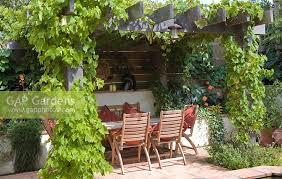 Grape Vine Pergola by Gap Gardens Vitis Grape Vine On Oak Pergola Table And Chairs