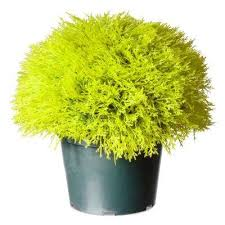 Artificial Topiaries - artificial foliage u0026 topiaries outdoor decor the home depot