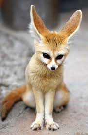 image unknown fennec fox jpg wolves of the beyond wiki