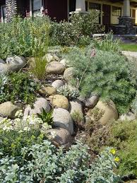 the 44 best images about california native landscaping on