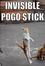 Invisible Cat Meme - 50 cat memes grab bag edition cattime