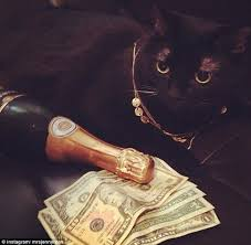 Rich Cat Meme - rich cats of instagram meet the moggies who are living in the lap