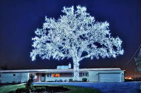 40 000 leds and a tree imgur