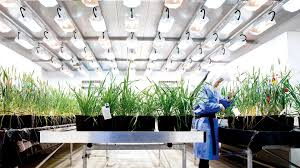 conviron growth house walk in plant growth room youtube