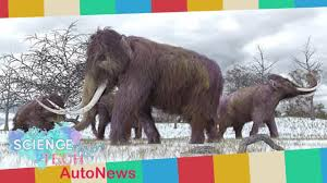 breaking 70 mammoth remains males