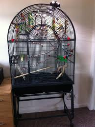 uv light for birds handreared cockatiel cage arcadia uv light morecambe