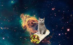 file dump space cats unintentionally but not regretfully