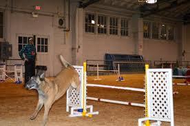belgian sheepdog national specialty news flash 2013 honeycreekfarm