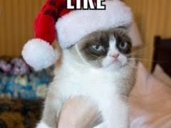 Christmas Grumpy Cat Meme - grumpy cat christmas meme weknowmemes