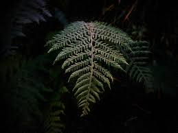 Free Picture Leaf Nature Fern Free Photo Fern Green Leaf Plant Free Image On Pixabay
