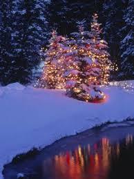christmas tree in snow amazing world pinterest