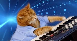 Keyboard Cat Meme - eight lives to go youtube star bento the keyboard cat has passed