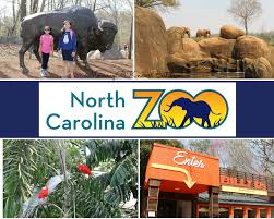 North Carolina Travel During Pregnancy images A visit to the north carolina zoo travel tips mommyb knows best png