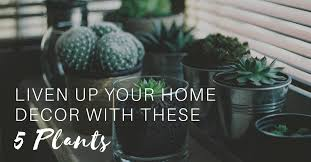 liven up your home decor with these 5 plants the maids blog