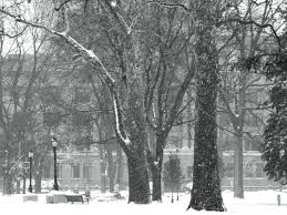 5 tips to prepare your trees for winter zoomer radio am740
