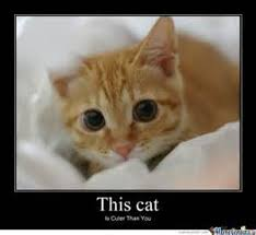 Cute Kitty Meme - magnificent meme monday cat memes petcentric by purina cute kitty