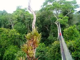 canopy amazon amazon shamans in peru wandering carol