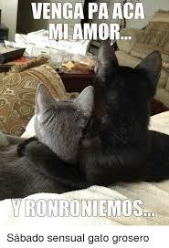 imagenes groseras de gatos vengapa aca mi amor yronroniemos sábado sensual gato grosero meme