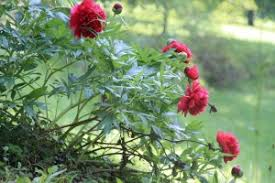 chambre d hote pontcharra fleurs parc château le clément gîtes chambres d hôtes fleurs