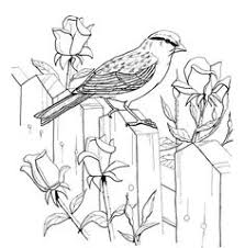 bird coloring pages adults bird spring