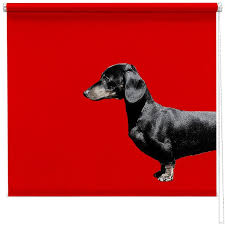 Dog Blinds Dachshund Sausage Dog Red Blind Picture Printed Blinds At