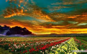 walppar madre colorful flower sunset wallpaper free wallpapers