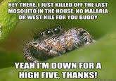 Spider Meme Misunderstood Spider Meme - misunderstood spider know your meme