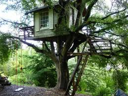 Cool Tree Houses There Are Some Pretty Cool Treehouses On Airbnb 21 Photos Thechive