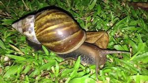 garden snail makati by hourphilippines com youtube