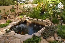 Water Ponding In Backyard Pond Romance Central Texas Gardener