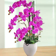 Fake Orchids Artificial Orchids For Sale Singapore Online Artificial Orchid