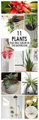 5 common houseplant health problems and how to fix them