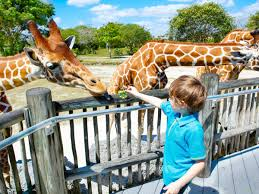 18 things to do in miami with kids