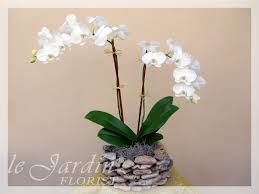 orchid arrangements stem imperial orchids arrangement in le jardin handmade planter