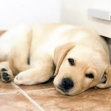 best flooring options for pet owners city tile murfreesboro