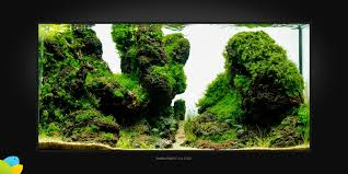 Aquascape Moss Kim Pulkki U2022 Aquascaping Love