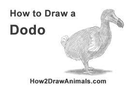 how to draw a dodo