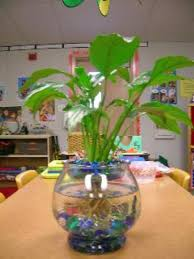 Betta In Vase Turn Your Betta Fish U0027s Aquarium Into A Glorious Piece Of Home