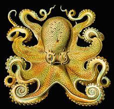 Seeking Octopus Globsters Abounding Part 2 Seeking Octopuses But