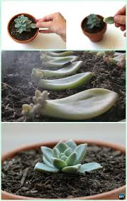 Succulent Gardens Ideas Diy Indoor Outdoor Succulent Garden Ideas Projects